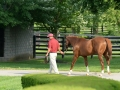 Group Tour 07 California Chrome