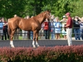 Group Tour 09 California Chrome