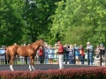 Group Tour 10 California Chrome