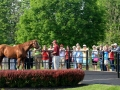 Group Tour 12 California Chrome