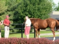 Group Tour 13 California Chrome with Member
