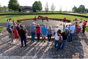 Taylor Made Horse Farm - California Chrome Photo by Joseph Rey Au & Helena Hau